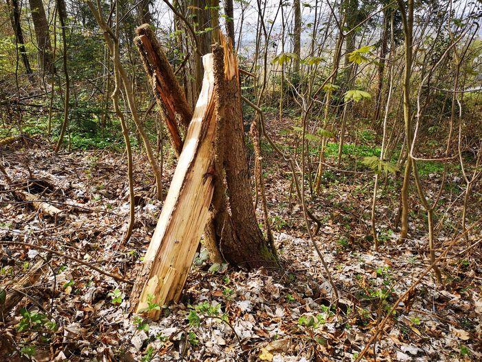 Tree nodded into itself. Fallen Tree Bark Forest Wood Nodded Into Itself Tree Shadow Sunlight Sky WoodLand Dead Tree Tree Trunk