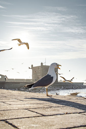 Birds flying over beach