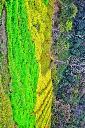 Green Color Full Frame Backgrounds Day Multi Colored Leaf No People Outdoors Close-up Grass Nature Streetphotography EyeEm Selects India Colourful Beautiful View Beauty Of Nature Scenics Tree Aerial View Cheerful Landscape Beauty In Nature Sky