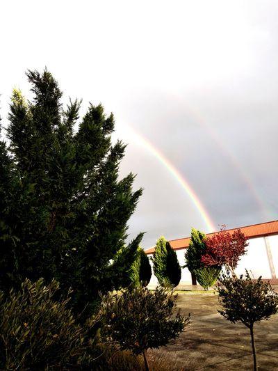Tree Rainbow Double Rainbow Sky