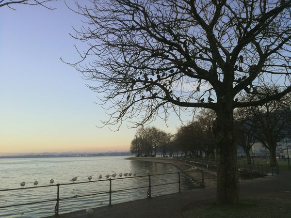 Water Tree Sky Nature Sea Outdoors No People Day EyeEm Nature Lover Huawei P9 Lite Beauty In Nature Landscape Nature Birds Bodensee Clear Sky First Eyeem Photo TreePorn Sunlight Nature Photography 10likes The Great Outdoors - 2017 EyeEm Awards