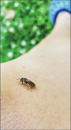 The bee's knees 😂 Makes me wonder where that sayin came from Bee Sweat Bee Drinking It Tickles Skin Nature EyeEm Nature Lover Critters Bugs Life