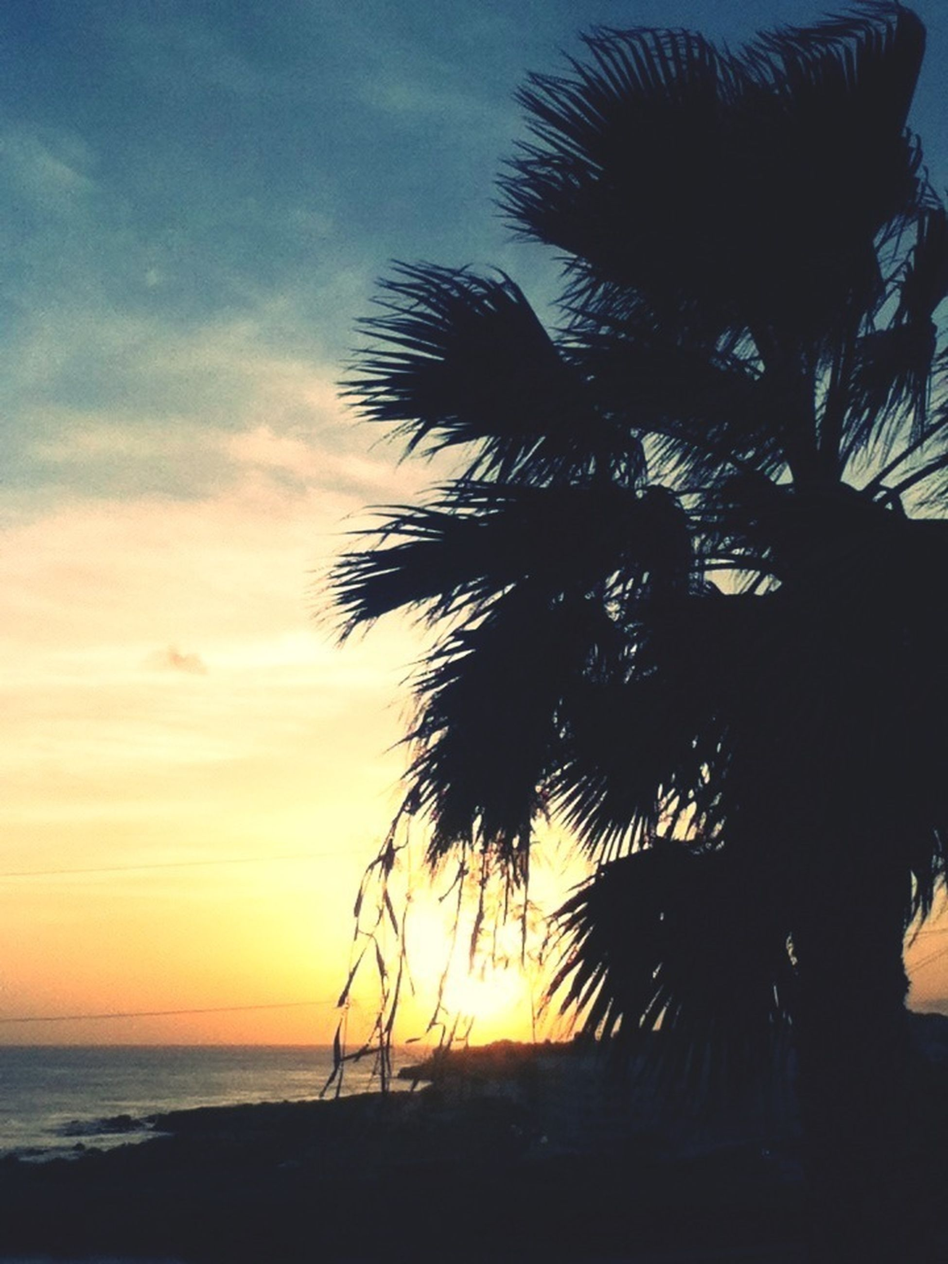 palm tree, sea, horizon over water, sunset, beach, tranquility, sky, scenics, tranquil scene, silhouette, beauty in nature, water, nature, tree, shore, idyllic, growth, tree trunk, outdoors, sun
