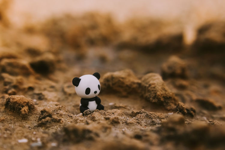 Close-Up Of Toy Panda On Sandy Field
