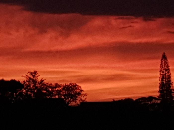 Tree Sunset Red
