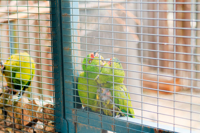 8/08/2017 - 220 it's so much what happen in a blink of an eye... The Week On EyeEm Animal Themes Animals In Captivity Bird Birdcage Budgerigar Cage Close-up Day Domestic Animals Indoors  Large Group Of Animals Mammal Nature No People Parrot Perching Trapped Pet Portraits