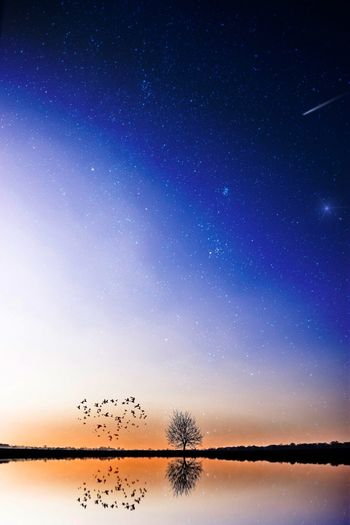 Star - Space Sky Night Nature Sunset No People Water Beauty In Nature Constellation Landscape Landscape_photography Astronomy Outdoors Star Field Tree Reflection Bird Shooting Stars HDR