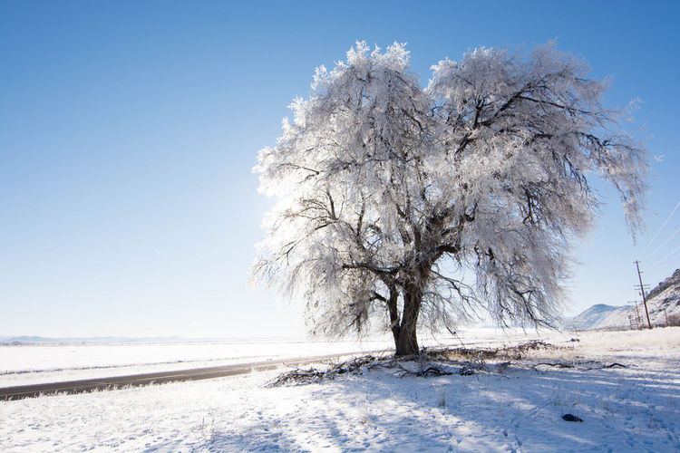 Beauty In Nature Blue Clear Sky Cold Temperature Day Frozen Ice Landscape Nature No People Outdoors Scenics Sky Snow Snowy Tree Tree Winter