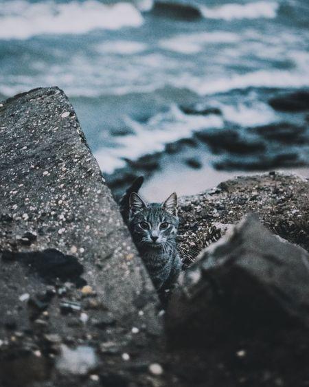 Portrait of cat sitting on rock by sea