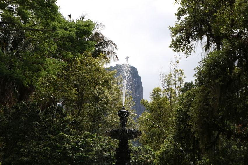 Colour Your Horizn Jardim Botânico Rj Rio De Janeiro Beauty In Nature Motion Sculpture Statue Tranquility