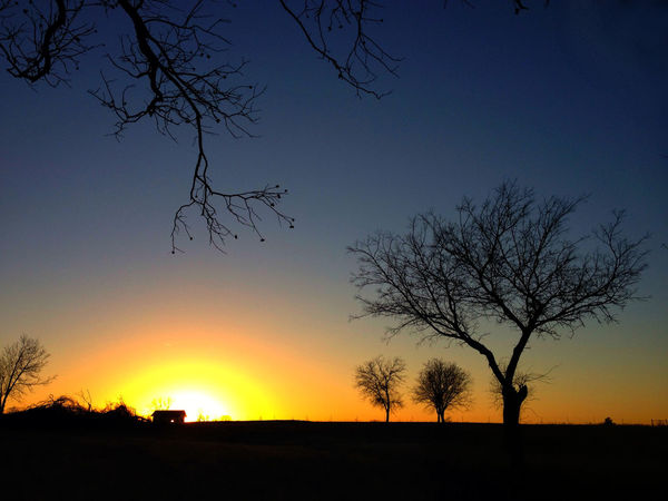 Night comes quickly in Winter Bare Tree Beauty In Nature Branch Day Nature No People Outdoors Scenics Silhouette Sky Sunset Tranquil Scene Tranquility Tree