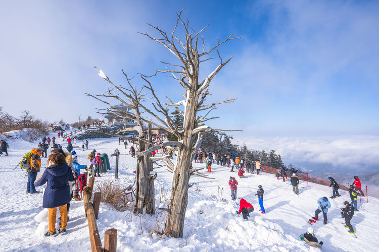 Winter of Deogyusan mountain at Muju Ski Resort in South Korea. Winter Snow Cold Temperature Group Of People Nature Tree Sky Real People Crowd Women Leisure Activity Large Group Of People Holiday Plant Scenics - Nature Day Warm Clothing Vacations Bare Tree Outdoors