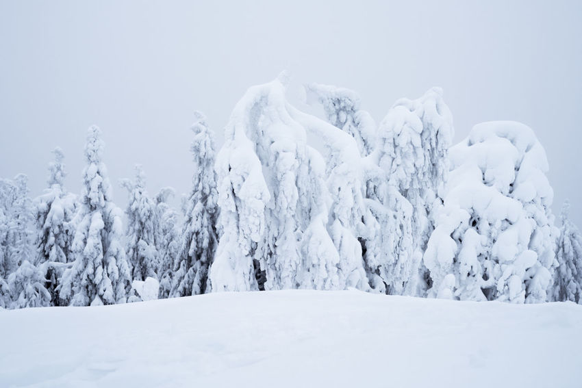 Scenic view of snow covered trees against cloudy sky in Koli National Park, Finland Finland Koli National Park Boreal Forest Taiga Trees Natural Spruce Tree Snow Winter Cold Temperature White Color Frozen Ice Nature Polar Climate Outdoors No People Beauty In Nature Scenics Landscape Travel Destinations Freshness Shades Of Winter