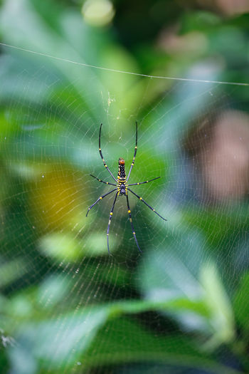 Insy Winsy Animal Themes Animals In The Wild Arachnid Close-up Complexity Day Focus On Foreground Fragility Insect Nature One Animal Outdoors Selective Focus Spider Spider Web Spinning Survival Web Wildlife