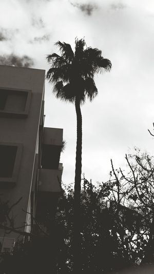 / palm tree on town / MyPhotography Lifo Vintage Nature Storm Cloud