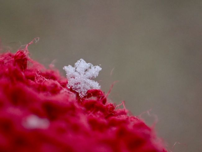Macro Snowflake Snowflake Snowflake ❄ Red Close-up Nature Fragility Beauty In Nature Flower Petal Shades Of Winter