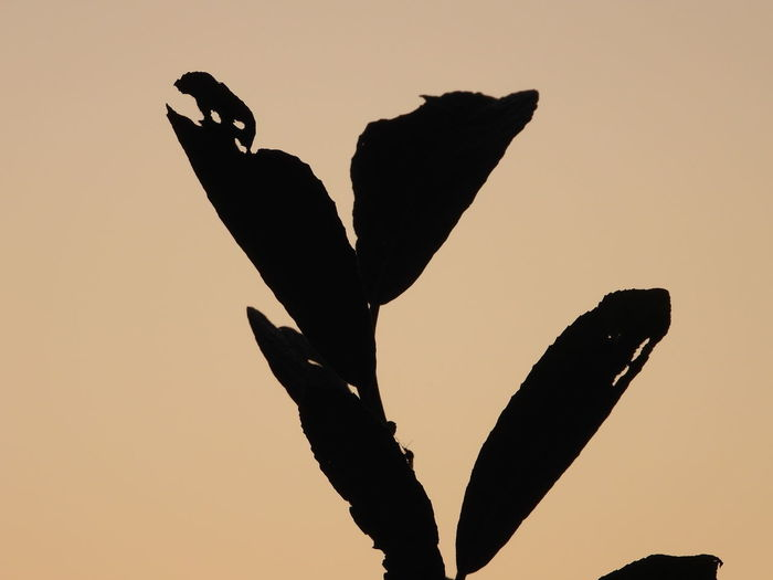 Low angle view of silhouette bird against clear sky