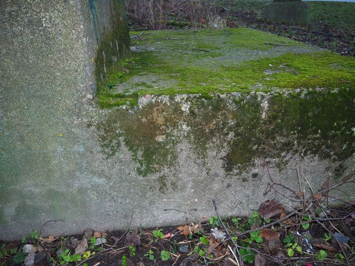This old stone was all covered in moss. Has probly been there for decades Deserted Places Green Color Moisture Nature No People Old Mossy Stone Outdoor Photography Outdoors