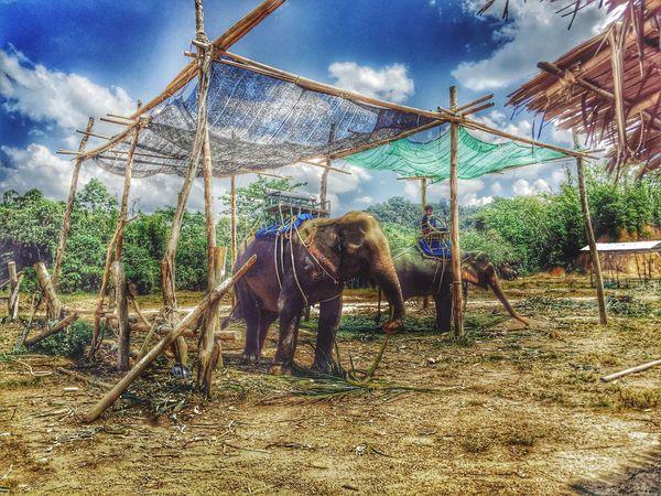 Nature Collection Taking Photos IPhoneography Relaxing In The Sun Holidays ☀ Safari Aonang Krabi Open Edit Holiday @Aonang_Krabi