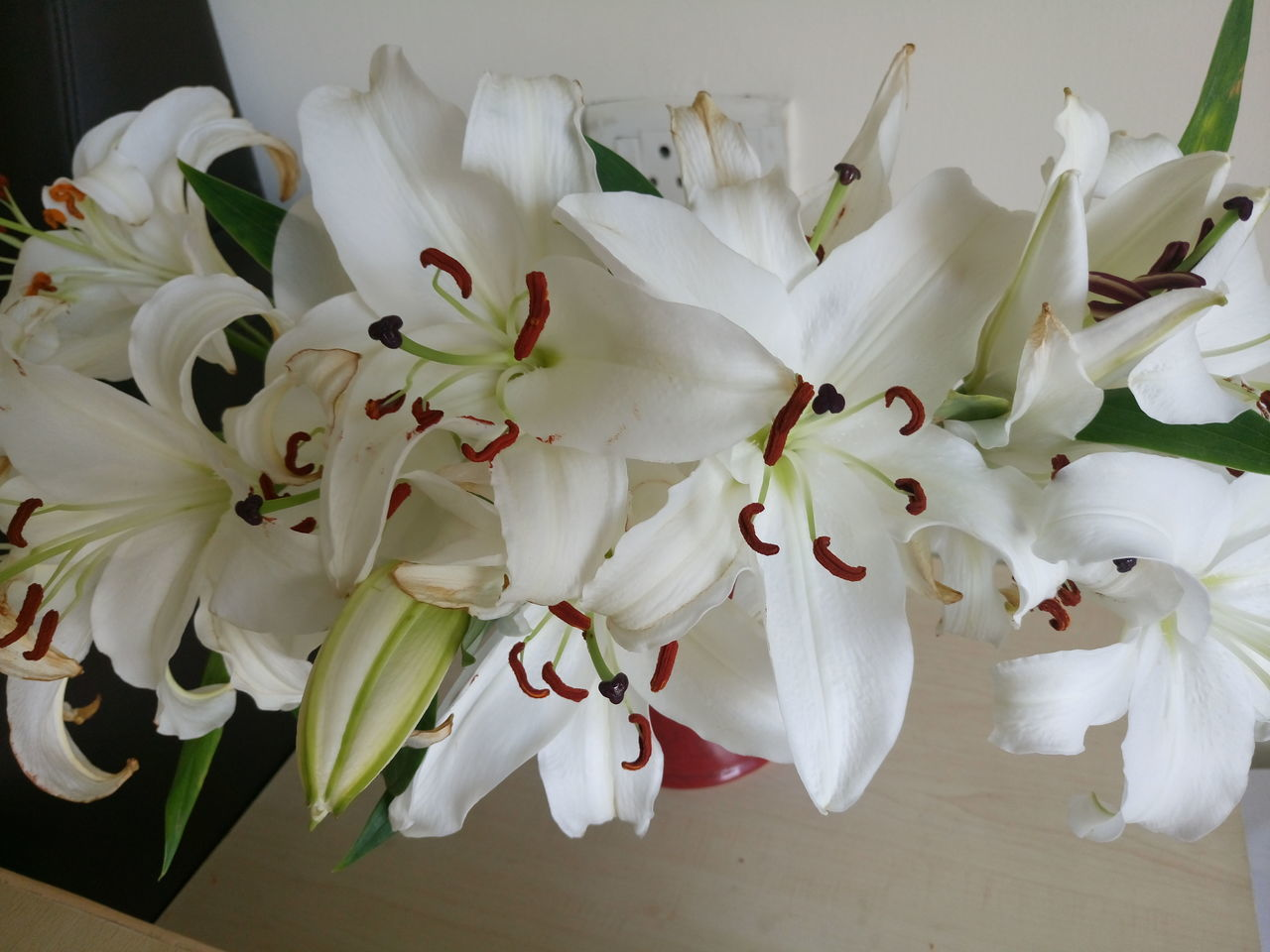 flower, petal, white color, beauty in nature, fragility, flower head, nature, freshness, no people, close-up, growth, indoors, day