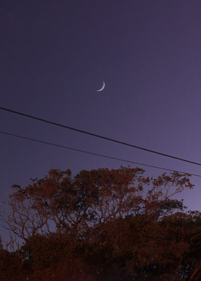 Sky Moon Tree Low Angle View No People Beauty In Nature Scenics - Nature Nature Dusk Cable Plant Crescent Astronomy Tranquility Tranquil Scene Half Moon Space Outdoors Silhouette Night Planetary Moon Full Moon Telephone Line Eclipse