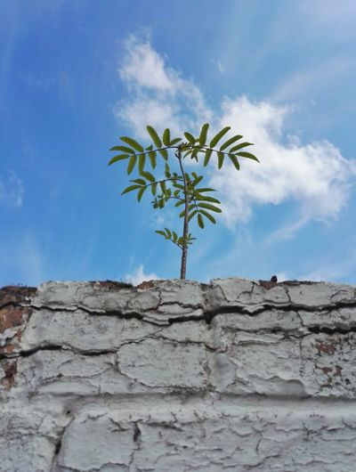Tree Desert Palm Tree Arid Climate Sky Close-up Plant Stone Wall Single Tree Surrounding Wall Rock Formation Flower Head Rocky Mountains Pollen Petal