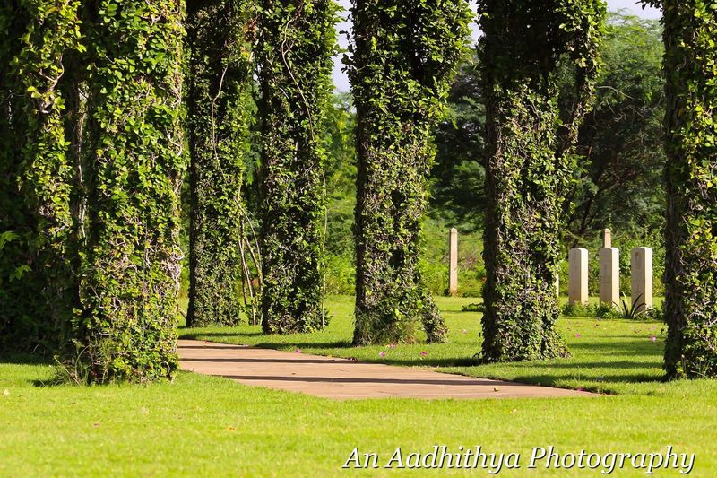 Madras War Cemetery Early Morning Canon700D Naturallight