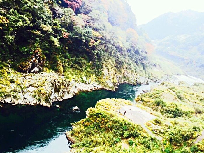 Nature Water Beauty In Nature Scenics Cliff Outdoors Tranquility Mountain No People Green Color Tree Trip Photo Trip Power In Nature Green Color Beauty In Nature Travel Destinations 小歩危 大歩危 観光 祖谷のかずら橋 Tokushima Tokushima_Japan 自然 Nature