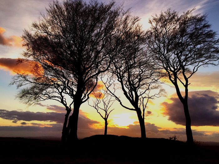 Sunset Trees Shillouette Light And Shadow Colors Clouds And Sky