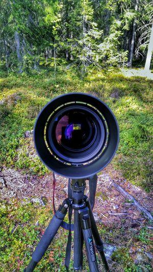 Wherearethebirds? Inthewoods Sigma 150-600c Photowalk