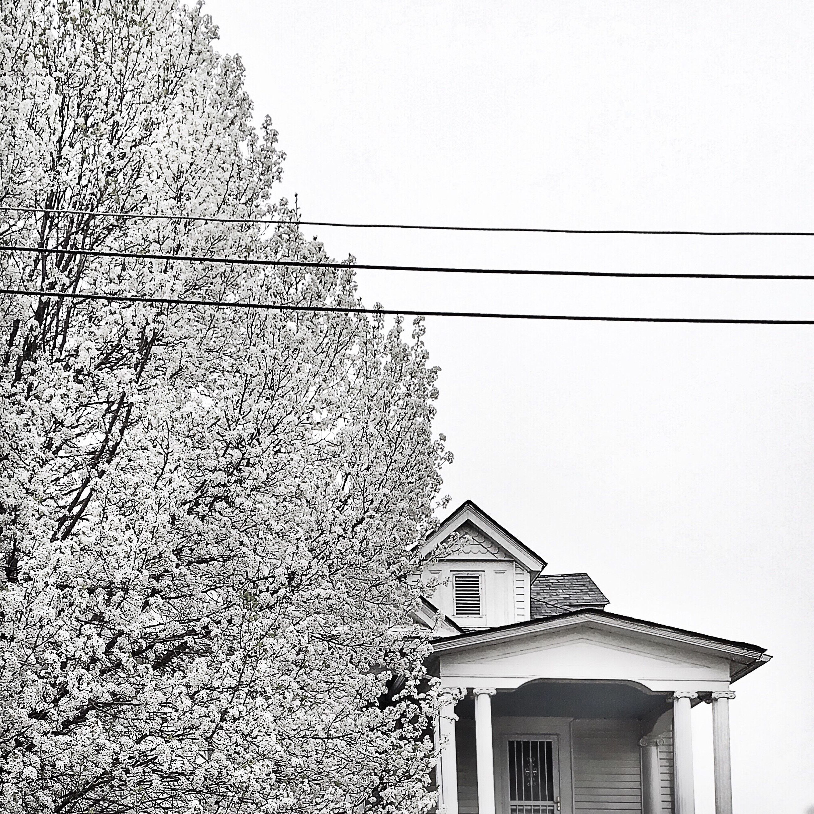 building exterior, architecture, built structure, house, low angle view, residential structure, residential building, clear sky, window, roof, building, power line, sky, day, outdoors, no people, tree, cable, high section, growth
