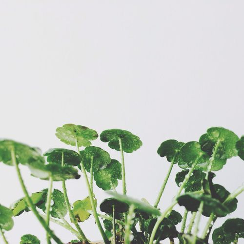Green Great Greatlife/