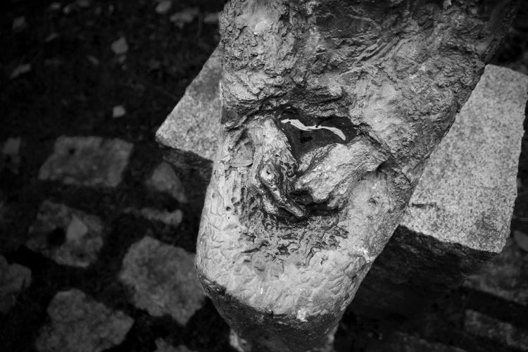 EyeEmNewHere Animal Themes Close-up Day Nature No People Outdoors Sculpture Statue Textured
