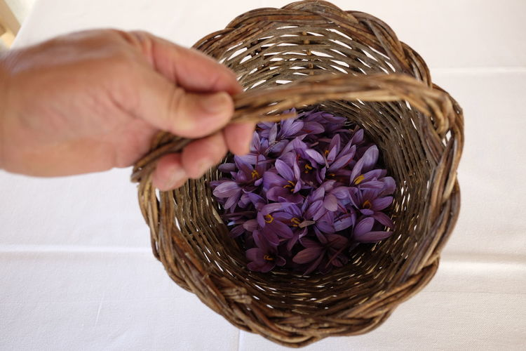 Basket Close-up Day Flower Flower Head Fragility Freshness Holding Human Body Part Human Hand Indoors  Nature One Person People Petal Purple Real People Saffron Whicker