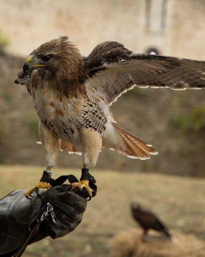 Bird Animal Themes Animals In The Wild One Animal Animal Wildlife Bird Of Prey Outdoors