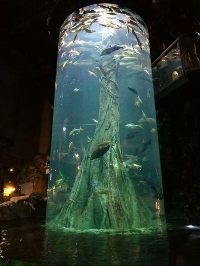 Fish go round! Aquaria Klcc