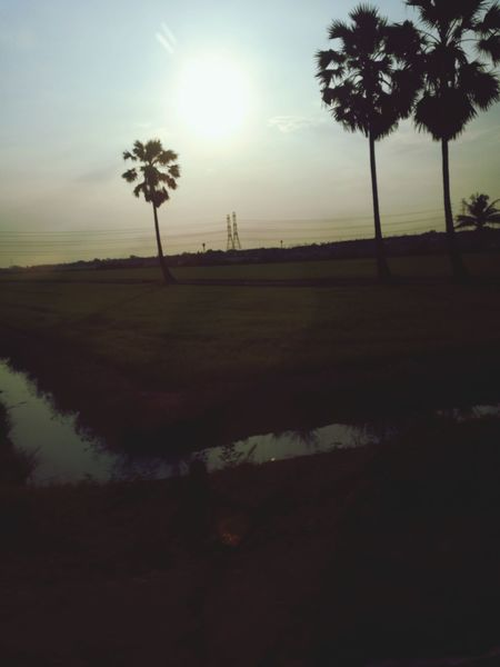 Tree Reflection Grass Tree Area Beauty In Nature Tree Trunk Silhouette Vacations Cloud - Sky Sunset Field Palm Tree Landscape Fog Tranquility Shadow Outdoors No People Scenics Nature