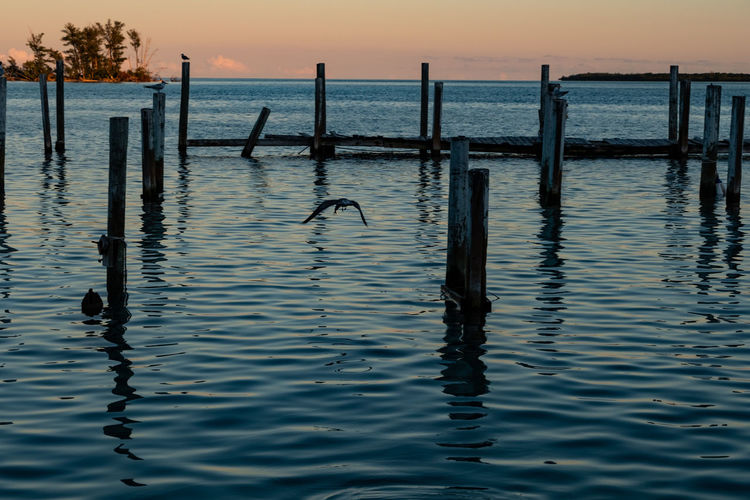 One Less Day Water Sea Sky Waterfront Tranquility Post Sunset Nature Beauty In Nature Tranquil Scene Wooden Post Reflection Scenics - Nature Silhouette Wood - Material No People Rippled Outdoors Idyllic Bimini