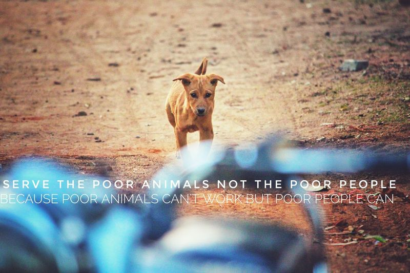 Serve The Poor Animals not the poor people Help Save Animals Generous Kind Poordog Helpless Dog Dog Pet Helpless Poor  Day Small Doggy Sad Lonely