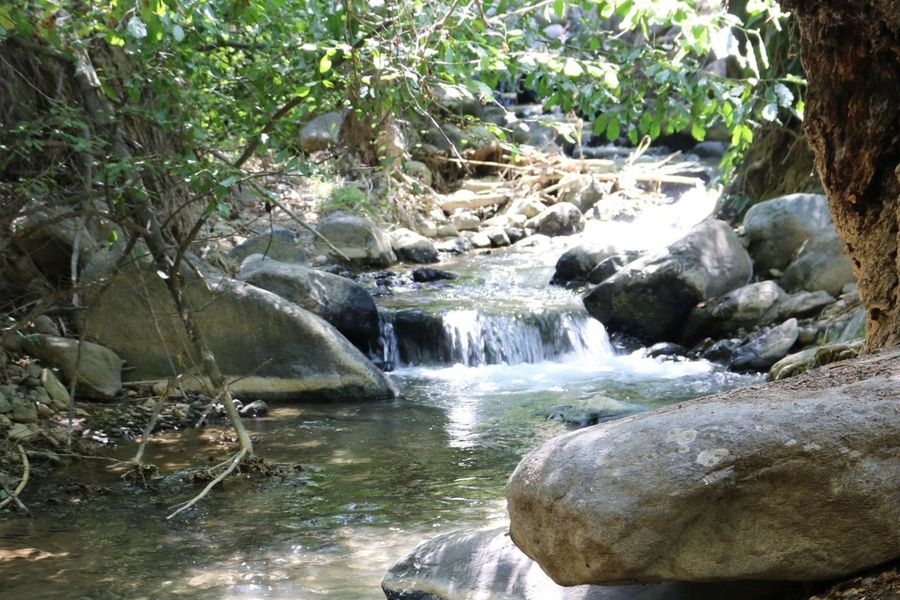 Stream Water Rocks Trees Plants No People Nature Small River Peaceful Kakopetria Cyprus Natural Beauty Wild Plant Nature_collection Nature Beauty Naturelovers Nature Photography Troodos Forest Path Forest Trees Forestwalk Forest Photography Forest Forest Walk Small River In Forest