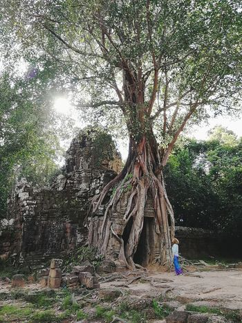 Temple Outdoors Curly Hair Girl Tree PhonePhotography P9 Huawei Architecture Tree Tree Trunk Root Branch Growing The Traveler - 2018 EyeEm Awards The Great Outdoors - 2018 EyeEm Awards
