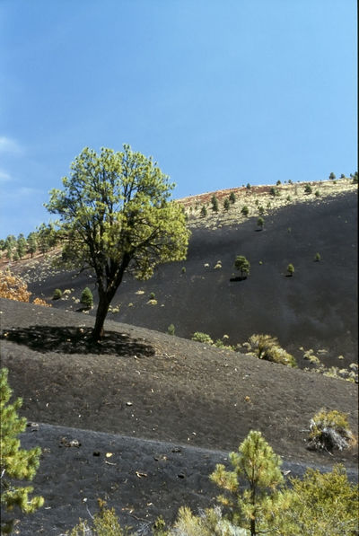 Trip to the West of the U.S. (1993) - Sunset Crater (Analogue Slides scanned, enhanced, sharpened and denoised; originally photographed with polarized Filter) 1993 Analogue Photography Beauty In Nature Blue Clear Sky Day Footpath Landscape Nature Non-urban Scene Outdoors Physical Geography Remote Scan Scenics Shadow Solitude Summer Sunlight Trail Tranquil Scene Tranquility Tree Vulcanism Western