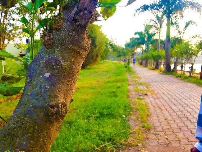 Beauty In Nature Day Diminishing Perspective Footpath Grass Green Green Color Growth Narrow Nature No People Outdoors Pathway Plant Scenics Sky Sunlight The Way Forward Tranquil Scene Tranquility Tree Tree Trunk Treelined Vanishing Point Walkway