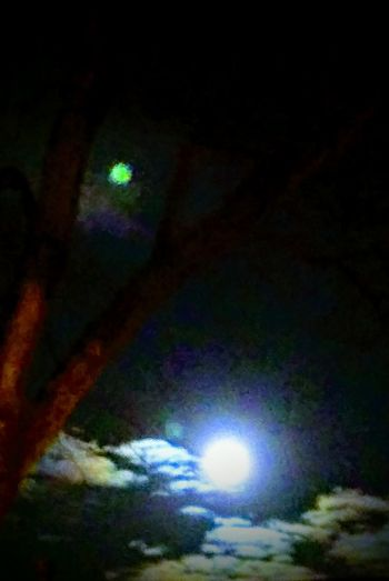 Illuminated Night Nature Low Angle View No People Outdoors Beauty In Nature Sky tree Full Moon Night  Wolf Moon Eyem Gallery Irwin Collection