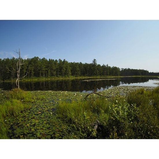 Robertsrun Pinelands Pinebarrens Photography landscape Beautiful morning from an awesome deep in the pines of nj