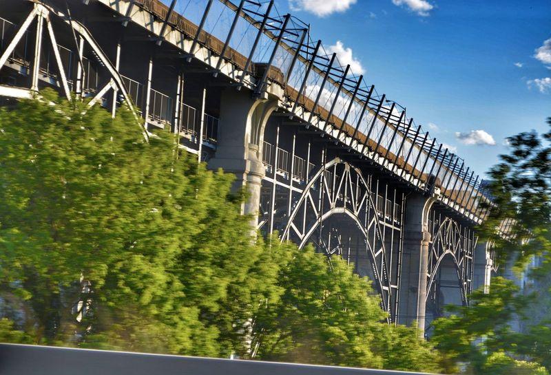 Tree Bridge - Man Made Structure City Sky Architecture Built Structure
