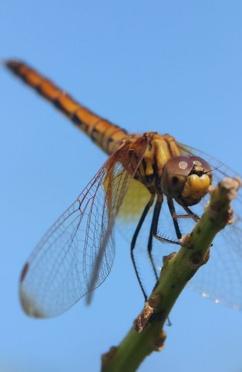 Close-up of dragonfly on plant against sky