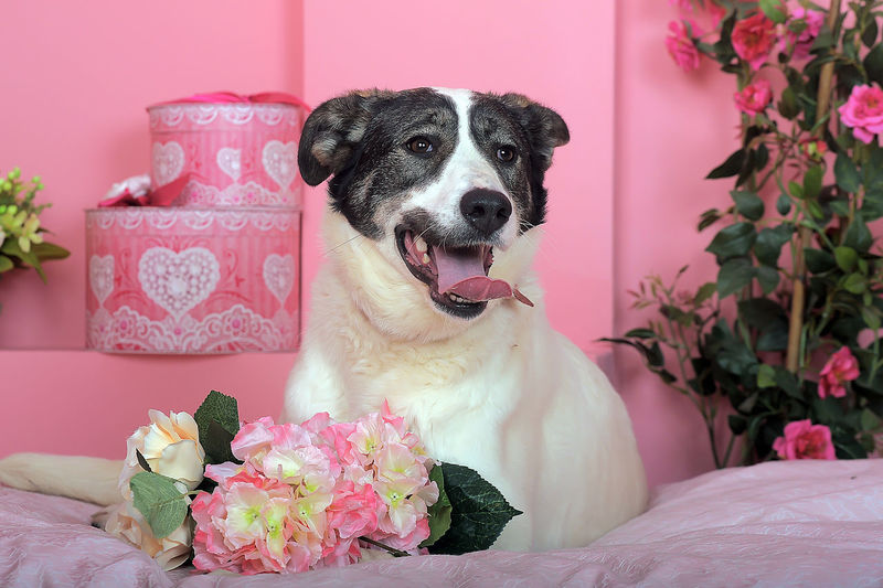 Close-up of dog with pink flowers