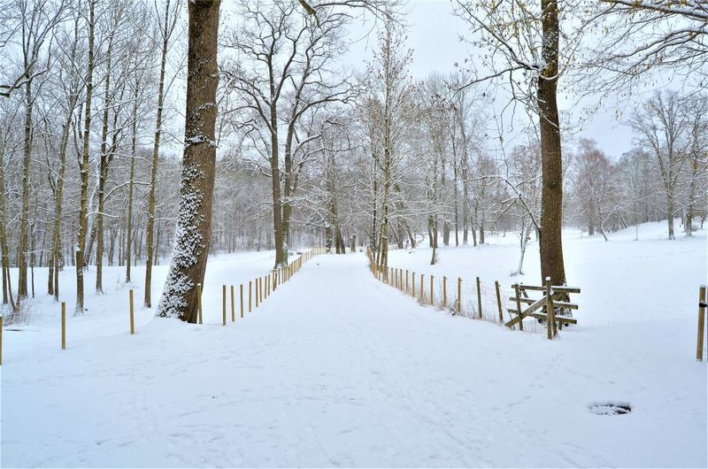 Snow Cold Temperature Winter Tree Bare Tree Tranquility Plant No People Tranquil Scene Land White Color Beauty In Nature Covering Scenics - Nature Nature Field Day The Way Forward Non-urban Scene Outdoors