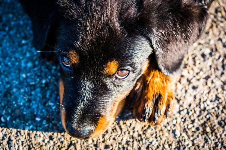 Einen wunderschönen Sonntag - A beautiful Sunday Eye4photography  Open Edit Puppy EyeEm Gallery